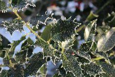 Frost, Metsä, Maisema, Puut, Kylmä, Talvi, Jäistä