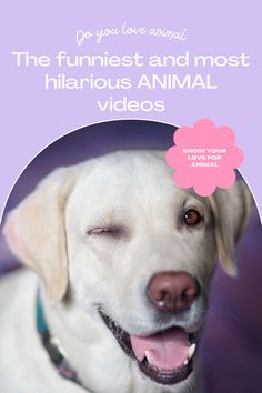 Top 10 Cutest funny animal — Small Cutest animal We Can't Get Enough Of Companion Dog Excellent. follow me for more! #dog #dogs #pet #doglover #doggy #puppy #puppies #puppys #dogoftheday #doglove #dogphotography #dogvideos #dogvideo dog, dogs, doglover Funny Animal Videos, Cute Funny Animals, Funny Dogs, Companion Dog, Try Not To Laugh, Cute Dogs And Puppies, Dog Photography, Super Funny, Dog Love