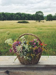New Jersey wild flowers : Pochuck Valley : Kirsten Rickert
