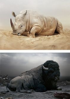 Until The Kingdom Comes: Animal Portraits by Simen Johan | Inspiration Grid | Design Inspiration