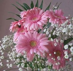 Pink Gerbera & Babies Breath to put on tables? Gerbera Daisy Wedding, Pink Gerbera, Gerbera Daisies, Wedding Bouquets, Wedding Flowers, Wedding Day, Fantasy Wedding, All Flowers, Beautiful Flowers