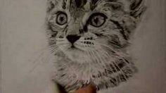 drawing cats with pencil - YouTube
