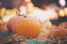 "fairylightsandcozynights: ""fairy lights & cozy nights 