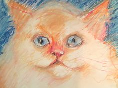 Portrait of a  beloved cat of a friend of mine.MURRAY