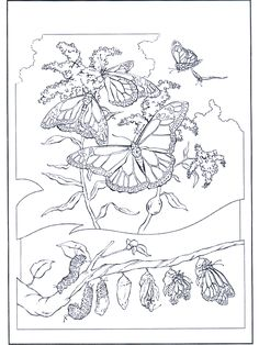 printable spring coloring pages free coloring pages coloringbook adult ideassketch pinterest butterfly flowers and adult coloring