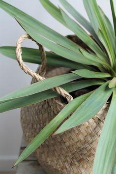 plant in mand -ingebruins.com