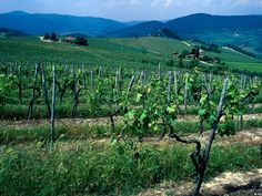 Wine Tasting at Tuscany's Best Wineries - Condé Nast Traveler