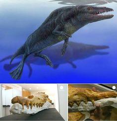 Whale evolution.