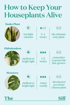 Diy Garden, Indoor Garden, Garden Plants, Indoor Plants, Potted Plants, Garden Landscaping, Garden Ideas, House Plants Decor, Plant Decor