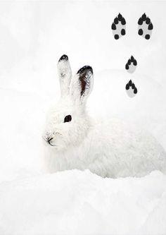 Tunnista eläinten jäljet lumessa | Meillä kotona Biology For Kids, Nature Crafts, Finland, Rabbit, Animals, Project Ideas, Science, Dwarf Rabbit, Bunny