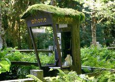 Hoh rain forest, Washington's Olympic peninsula