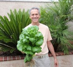 This is ONE HEAD OF ORGANIC LETTUCE grown in 40 days in a Portable Farm and fertilized by water from fish tanks.