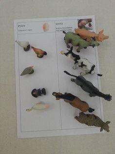Ptáci vs. savci (domácí zvířata) Montessori