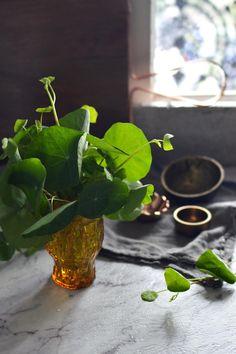 Nasturtium leaves about to be turned into pesto | heneedsfood.com