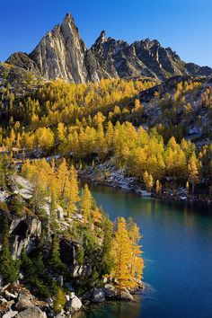 ✮ Larch trees at Perfection Lake in the Enchantment Lakes wilderness - WA