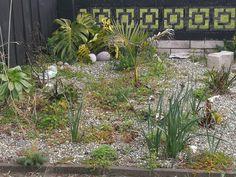 Jungle Gardens, Plants, Plant, Planets