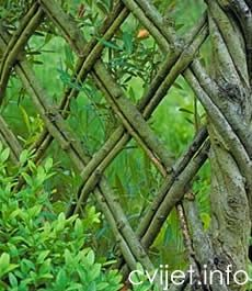 """"""" Living fence. How cool is that? I looked up the plant/tree used and it's a Weeping Willow!"""" The website is in a language I can't read. I would like a woven fence like this in my front yard - maybe. -CAB"""