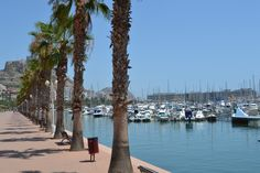 alicante - Palm trees and marina