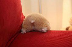 a hamster's butt