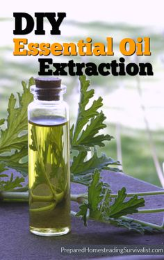 4 DIY essential oil extraction methods to make at home. Most people have access to a variety of the helping herbs that can be used during a disaster | Prepared Homesteading Survivalist