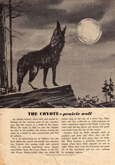 vintage coyote illustration - Google Search