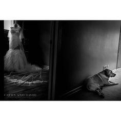 Venus' dog was so sad to see her leave that morning. #weddingphotography #weddingphotographer #chicagowedding #chicagoweddings #weddingphotojournalism #details #dog #dogsofinstagram #dogs #weddingdress #wedding #weddings #bnw #blackandwhite #bw #candid #chicagoweddingphotographer by cathydavidphoto