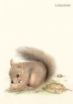 日本栗鼠 Japanese Painting, Squirrels, Creatures, Bird, Illustration, Animals, Animales, Animaux, Illustrations