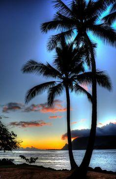 super schöne bilder von palmen - blauer schöner hintergrund
