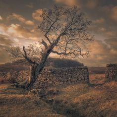 """Leaning Tree, Bradgate Park"" by AndyStafford , Unusual Art, England And Scotland, Stunning Photography, Park Homes, Leicester, Great Britain, Places To Visit, Country Roads, Beacon Hill"