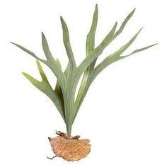 "Staghorn Fern - 4"" Pot 300848872051   eBay Fern Plant, Plant Leaves, Ferns Garden, Staghorn Fern, Silk Arrangements, Foliage Plants, Green Silk, Artificial Plants"