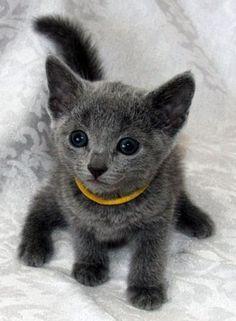 Oh my. Grey cuteness!