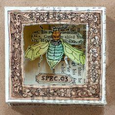 beetle shadow box by Aya Rosen