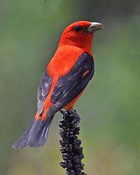 birds of wisconsin   Wisconsin Bird Conservation Initiative