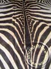 Zebra hide 2 closeup