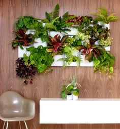 "11 Indoor Plants for a Tiny Space. ""Mod Pot"" - Equal parts planter and wall decor, Urbio is a leak proof magnetic garden."