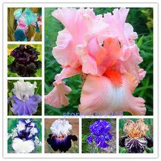 100ピースiris種子、iris蘭の種、rare家宝tectorum多年生の花の種、24色が選べる、植物のためのホームgatden