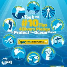 OCEAN FORCE bracelets - Take the Project AWARE 10 Tips for Divers Pledge to Protect the Ocean Planet. Check out our Action Kit for tools and resources to help spread the word.