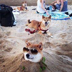 Curtindo a vida adoidado! Animais mostram que sabem se divertir e adotam estilo  http://r7.com/sFiU