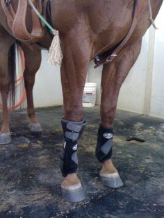 Here's a little secret: Bob Avila uses Quick-Wrap bell boots turned upside down around his horses knees instead of knee boots. He says they work great!