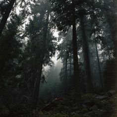 Image shared by sofija. Find images and videos about photography, nature and photo on We Heart It - the app to get lost in what you love. Forest Tumblr, Twilight, Slytherin Aesthetic, Nature Aesthetic, Wow Art, Black Forest, Deep Forest, Stranger Things, Mother Nature