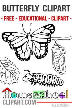 Lots of Insect Clip Art