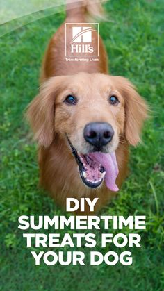 As the dog days of summer start to heat up, many pet parents look for ways to keep their dogs cool. Why not try making some frozen dog treats for summer fun with your pup? Frozen treats not only let you experiment in the kitchen, but they may help prevent dehydration and keep your pooch entertained. Doggie Treats, Homemade Dog Treats, Healthy Dog Treats, American Alsatian, Foods Dogs Can Eat, Frozen Dog Treats, Dog Water Bowls, Pointer Dog, Loyal Dogs