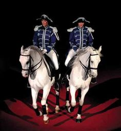 Lippizaner Stallions