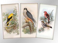 Vintage birds nature illustrations 1x2 inch digital collage sheet domino tile jewelry making  (304) buy 3 get 1 bonus #karisagraphic #etsy #handmade #digital #collage #shhet #digitalcollagesheet #craft #jewelrymaking