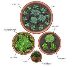 overhead view of salad garden in containers