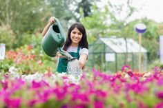 """Many individuals consider just how to water a garden. They could challenge over """"How usually should I water a garden?"""" It's truly much less complicated since it appears or concerns such as for example, """"How much water must I offer my garden?"""", but there are several things that should be thought about. These range from the varieties of flowers you're growing, and soil you have's sort, what your weather or climate is like."""