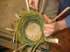 They are using bands of willow and then the greem stuff is the marsh grass from around our pond at school. When they have finishe weaving they are going to coat them with clay/mud and make faces on them