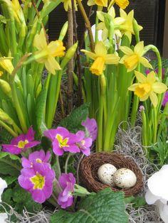 spring container... mini daffs and primula
