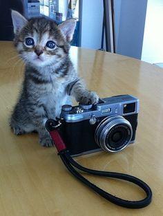 Catphotographe !