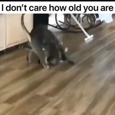Source by videos wallpaper cat cat memes cat videos cat memes cat quotes cats cats pictures cats videos Funny Animal Memes, Cute Funny Animals, Funny Animal Pictures, Cute Baby Animals, Cat Memes, Funny Cute, Cute Cats, Funny Video Memes, Funny Cat Videos